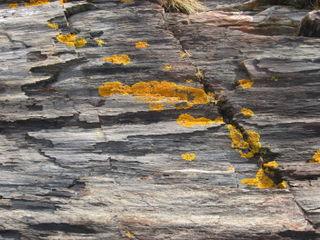 Orange-lichen-grey-rocks