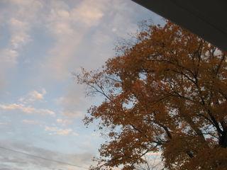 Orange-tree-blue-grey-sky