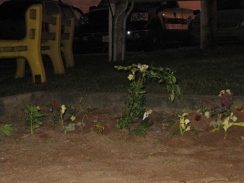 Children-plant-gardens