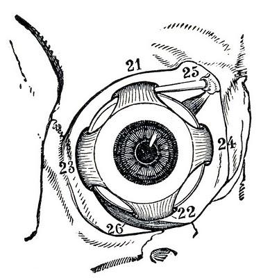 Eyeball-graphicsfairy002