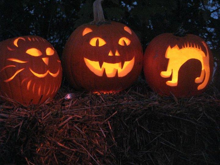 Cat-jack-o-lanterns2