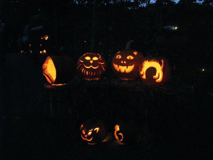 Cat-jack-o-lanterns