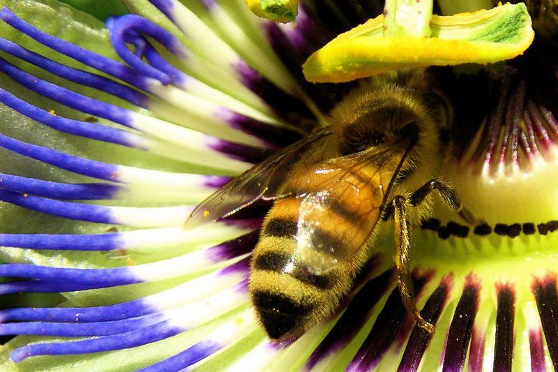 Striped-bee-striped-flower