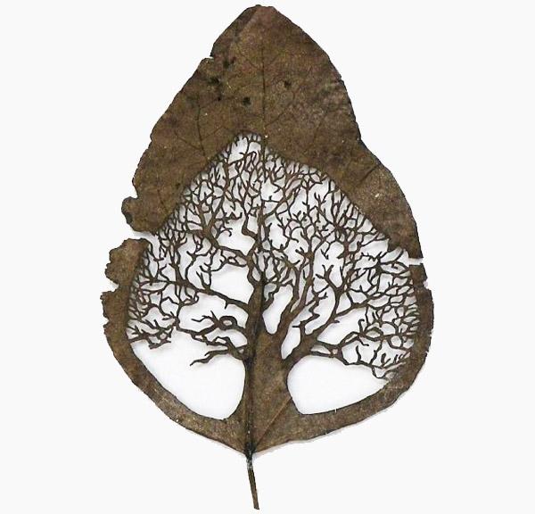 Lorenzo-duran-carved-leaves2