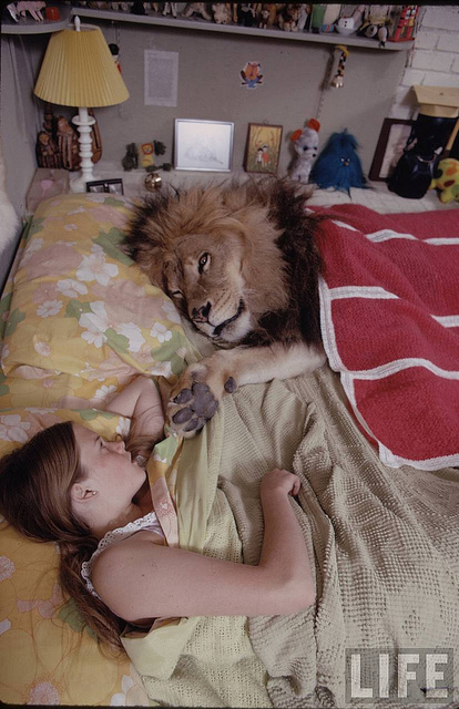 Living-with-a-pet-lion