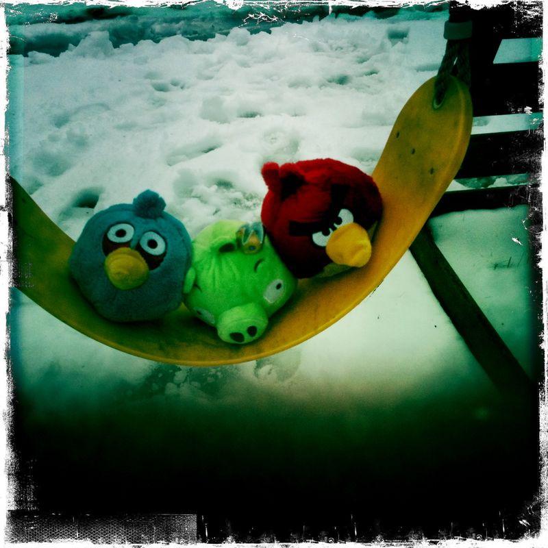 Snow-day-birds