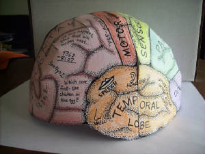 Brain-hemisphere-hat
