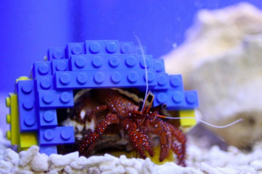 Harry-the-hermit-crab-and-his-lego-shell-home