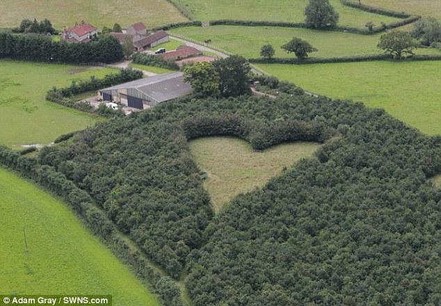 Heart-meadow