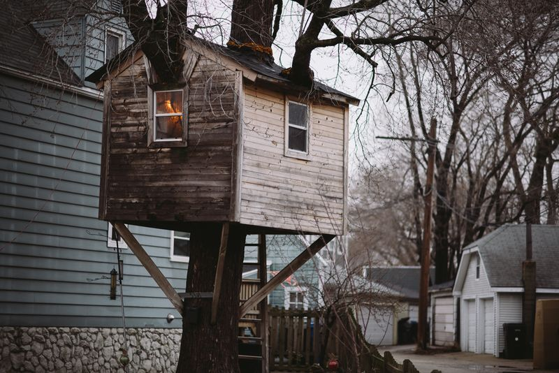 Tree-house-branches