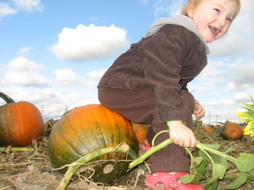 Testing_pumpkins_2